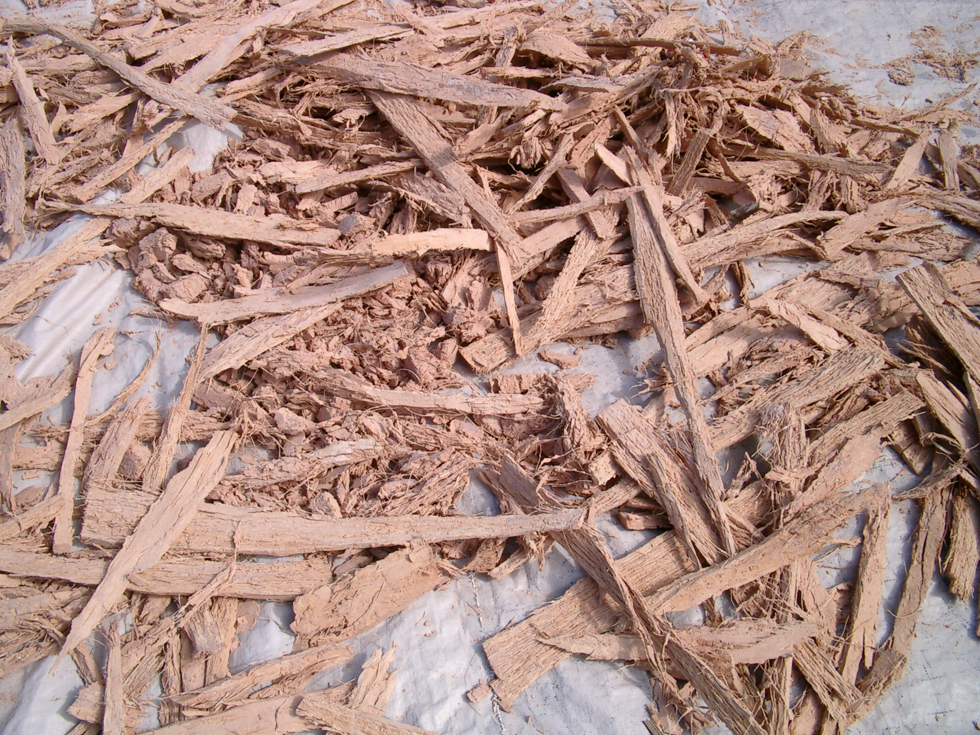 サゴ椰子の樹幹の芯を粉砕しかけたもの